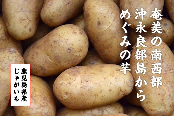 奄美の南西部 沖永良部島からめぐみの芋。ゴールド