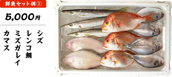 鮮魚セット1 5,000円