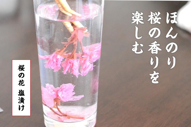 桜の花塩漬け