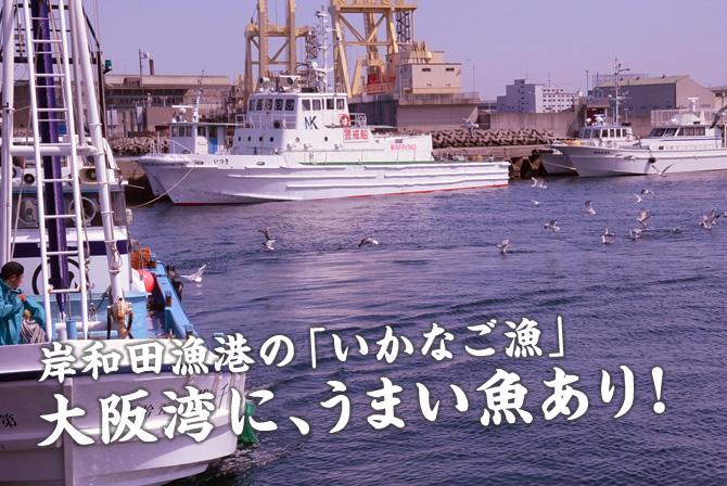 岸和田漁港の「いかなご漁」大阪湾に、うまい魚あり!