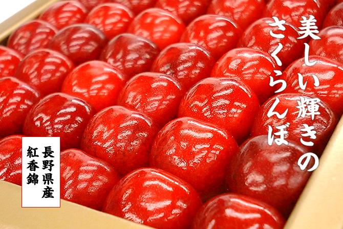 美しい輝きのさくらんぼ。紅香錦