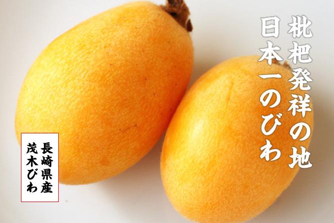 枇杷発祥の地 日本一のびわ。茂木びわ