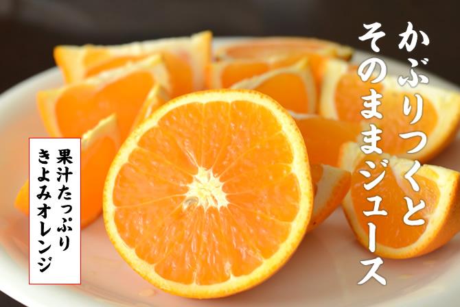 かぶりつくとそのままジュース。きよみオレンジ