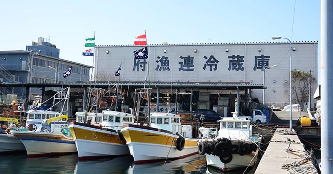 岸和田漁港。府漁連冷蔵庫