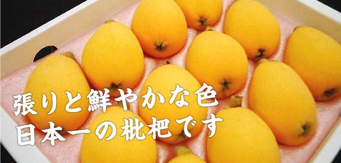 張りと鮮やかな色 日本一の枇杷です