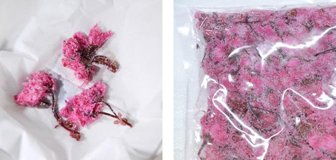 桜の花 塩漬け