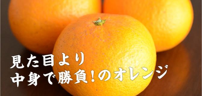 見た目より中身で勝負!のオレンジ