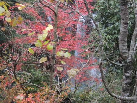 """周囲を見渡すと一条の滝が ここは""""滝見の湯""""というらしい"""