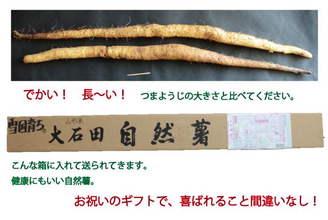 自然薯 山形県