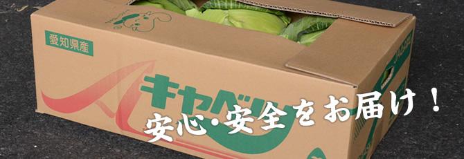 愛知県産キャベツ