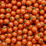 福岡県産 ミニトマト