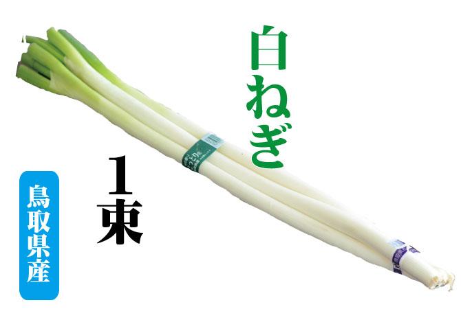 白ネギ 鳥取県産