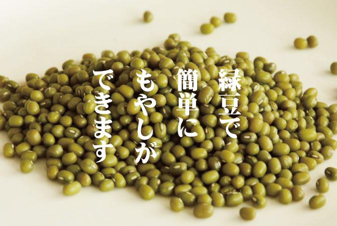 緑豆 もやし