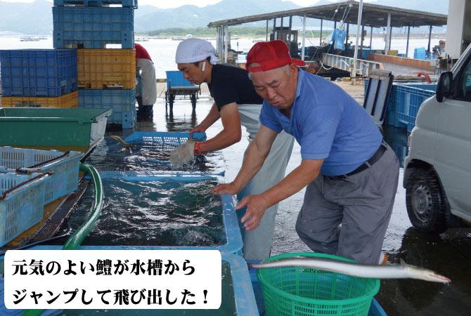 鱧(はも) 淡路産 福羅漁港