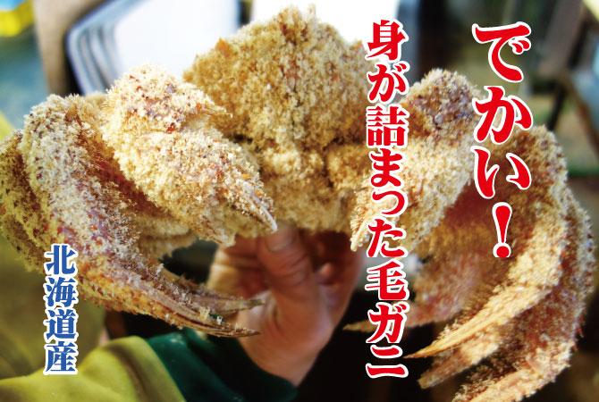 毛ガニ 北海道産