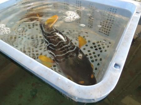 こんなにカラフルな魚も、名前は不明・・・