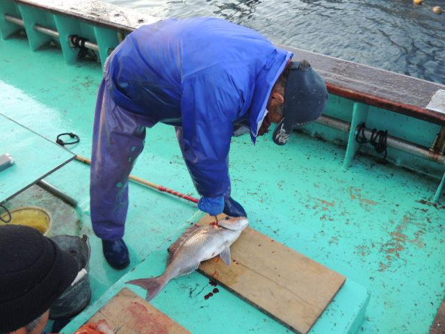 漁師さん(調理担当?)の漁師さんが、あがったばかりの真鯛を豪快にさばく・・・