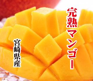 mango320