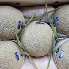 melon270