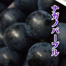 nagano_puple270