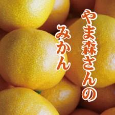 yamamori_mikan270