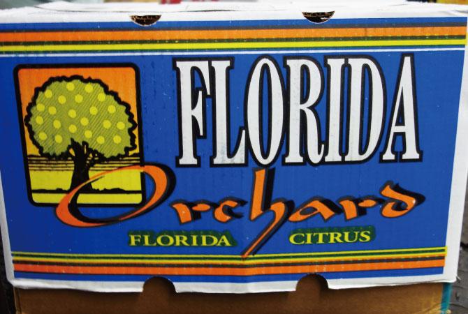フロリダ産 グレープフルーツ