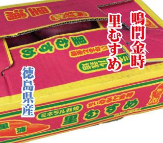 satomusume